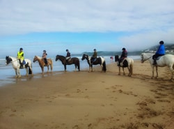 Horse riding lessons and Beach Rides
