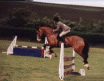 Woolacombe Riding Stables Home Page